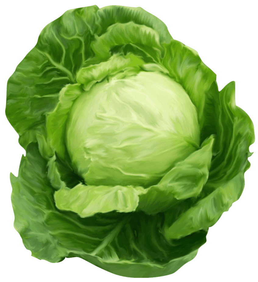 One of cabbage kinds