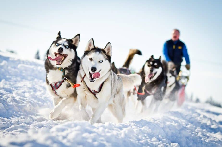 A man has a sledding with dogs on the snow