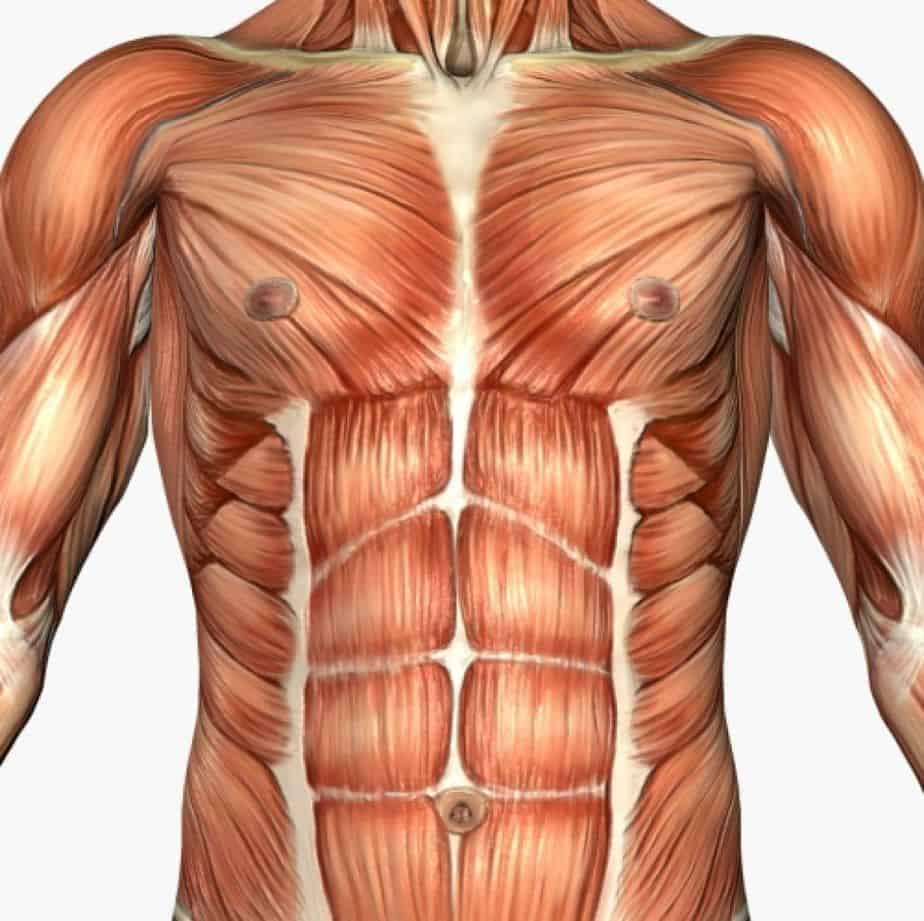 One of the roles of using vitamin D - Muscle shaping.