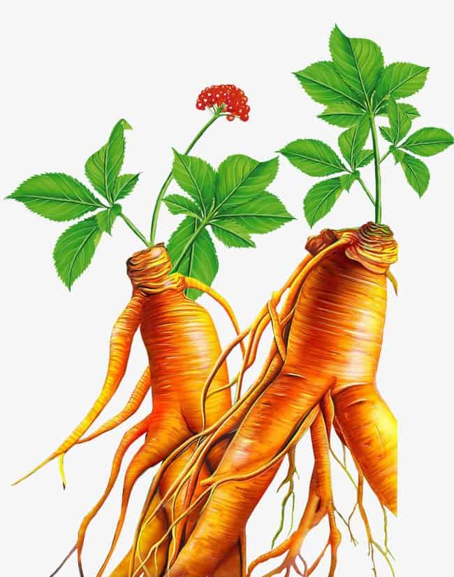 One of the best plants in the fight against aging - ginseng.