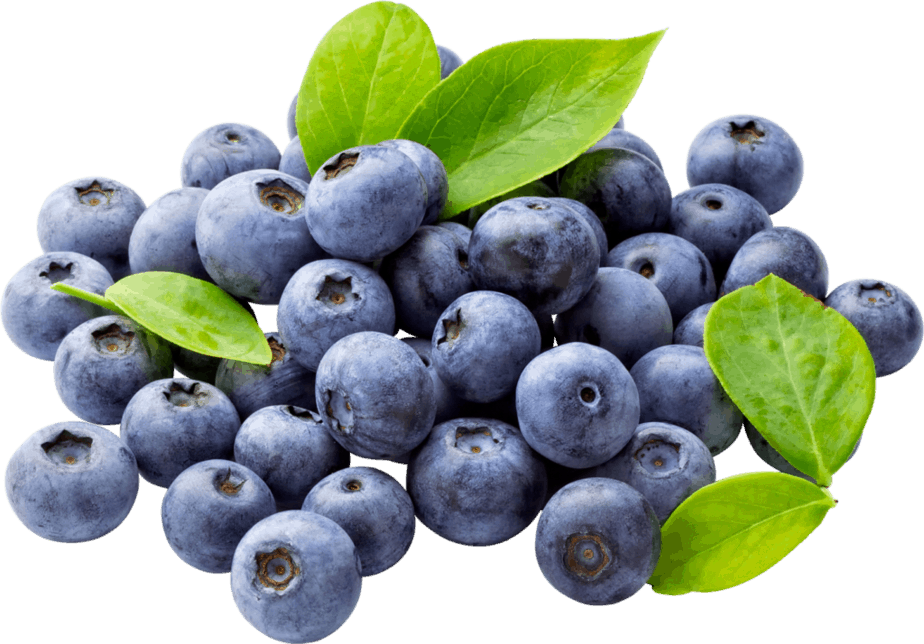 One of the best plants in the fight against aging - blueberry